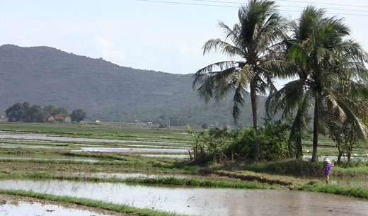 Rice paddies outside Nha Trang on the last day before I left (no rain!)